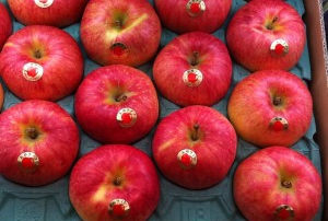 apples-300x224