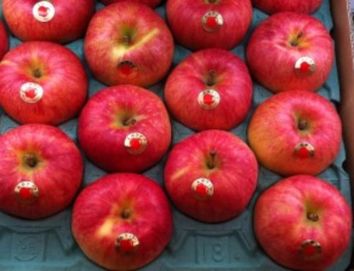 Japan: Aomori apples to get barcodes that show individual fruit's history
